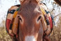 Donkeys / Donkeys ... so sweet!!!!