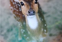 dierenliefde