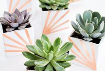 DIY: Green Thumb / Creating with indoor and outdoor plants.