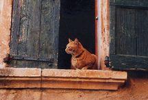♥cats