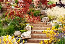 Water wise landscaping