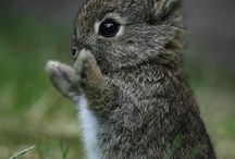 cute animals / by Lorin Desrochers