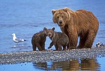 Demand Justice for mother bear
