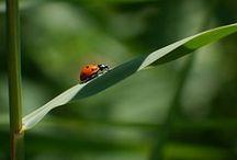 Motýli a hmyz