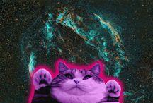 LOL cats / by Lauryn LaGrone