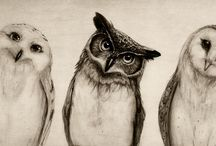 Images of owls