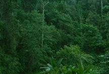west Sumatera Island