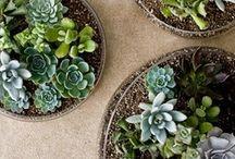 4H Gardening / by Cindy Wynn Canchola