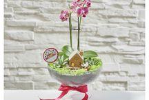 Orkideler / Özel tasarım orkideler
