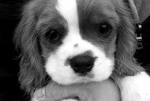Dog addict  / by Karen David