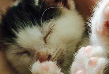 Koty ❤️