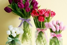 Spring Decor / by Stephanie Eckman