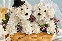 Flowers / by Irene Truscello Richardson