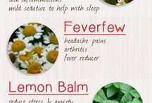 healing herbs/naturel medicin