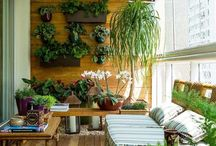 Plantas e Jardinagem