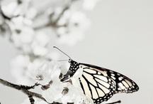 թคթเllเ๏ภ / Beautiful butterflies make you feel free