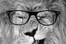 Leões,gatos, e outros felinos