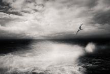 Fotografie in bianco e nero.