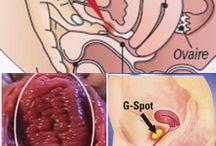 """*G-Boost* G-spot amplification / Il vantaggio principale del G-boost consiste nell' agevolare (grazie all'aumento volumetrico) la localizzazione del punto G, facilitandone la stimolazione. Il trattamento viene svolto in ambulatorio, in anestesia locale, pertanto è assolutamente indolore. Individuata il """"punto """"da trattare viene iniettato il filler di acido ialuronico che ne permette l'immediato rigonfiamento. Il materiale biocompatibile permarrà nell'area trattata fino al riassorbimento."""