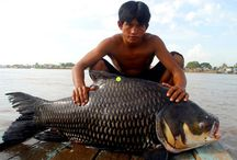 The Mekong River / Pinterest along The Mekong River
