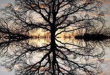 nature fantastique