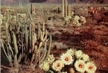 Desert Dreamin'