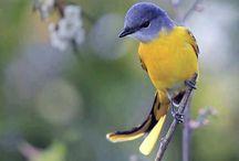 Bird / Birds