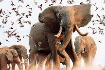 Beautiful (Fun) Animals Pictures