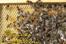 mehiläisharrastus - bees as a hobby