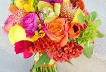 Blumen/ Pflanzen