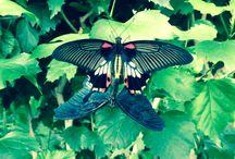Farfalle / Piccolo mondo delle farfalle