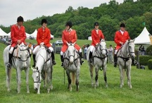 Fox Hunting / by Puddle Duck Creek Tack