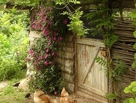 Greens / Think of garden, think of green? Incorporating the shades of green into the garden.