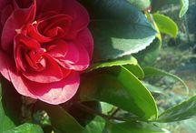 bloemen/tuin / selfmade