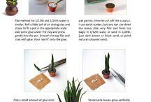 Plante couteau