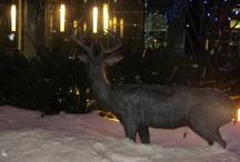 Winterlude in Ottawa / by Suzanne Hawkins