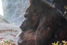 Wildlife and Other Critters / by Donna DeForbes @ Eco-Mothering