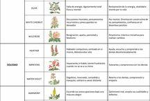 Flores y aromaterapia