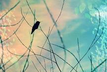 Photos I ♥ / by Ro Rainwater