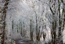 winters beauty