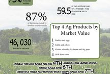 Ag Facts / Information about Agriculture