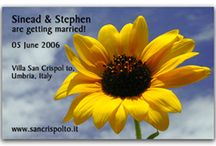 Sunflower Save the Date Magnet Ideas / Our Sunflower Save the Date Magnets will set the tone for any occasion. Stunning, Bright, Cheerful and Airy are just a few reactions for this style Save the Date. This design style may be used for a Birthday Save the Date, Wedding Save the Date, Anniversary Save the Date or any occasion you would like to Save the Date for.  We can be reached at 800.248.5605 with any questions.