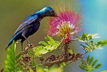 Natural Beauty of Bangladesh / Natural Beauty of Bangladesh