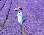 Inspiration Board | Lavender Painting