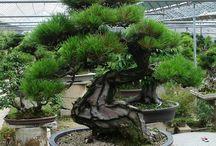 incredible bonsai !