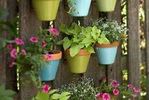 Virágok kertek