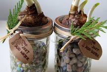 DIY - ideeën, planten in huis