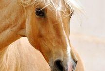 """gorgeous horses"""