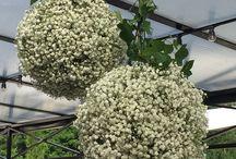 Art floral #AudaceFloraleChantilly / Fleuristerie