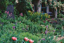 garden / by Michelle Deacon